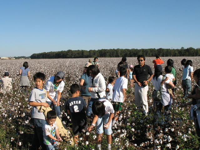 Visitors in the U.S. and around the world experience cotton picking & ginning